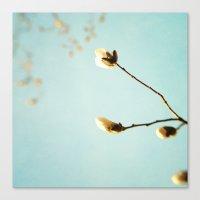 Magnolia Skies Canvas Print