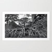 'Scottish Roots' Art Print
