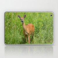 Deer On Edge Of Field Laptop & iPad Skin