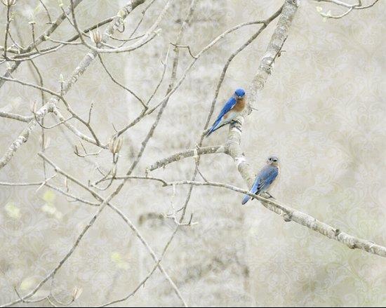 Bluebirds in Spring Art Print