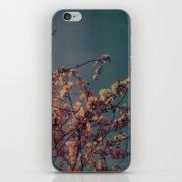 Cherry Blossoms, Polaroid iPhone & iPod Skin