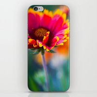 Blanket Flower iPhone & iPod Skin