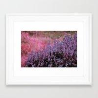 Calluna Framed Art Print