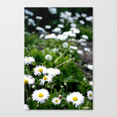 Careless Canvas Print