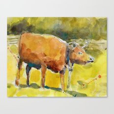 Cow, Bull you tell me? Canvas Print