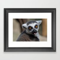 Ring Tailed Lemur Framed Art Print