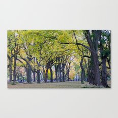 Central Park Fall Series 8 Canvas Print