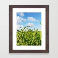Ripe Rice Framed Art Print