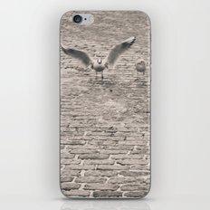 Bird2 iPhone & iPod Skin