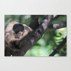 Ferocious Monkey Canvas Print