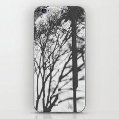 Tree Shadows - Solarized iPhone & iPod Skin