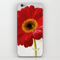 Red Gerbera iPhone & iPod Skin