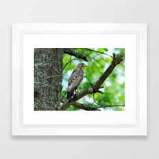 What's for lunch ? Framed Art Print