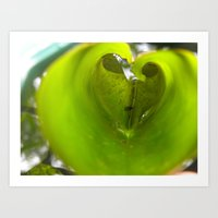 Love in a Lily Art Print