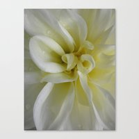 Nature's Dance in White Canvas Print