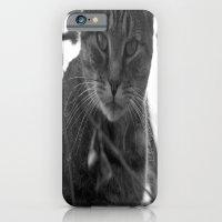 Winter Stare iPhone 6 Slim Case