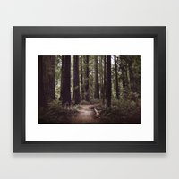 Redwood Forest Framed Art Print