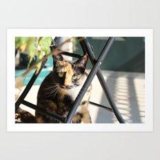 Calliope on the Porch Art Print