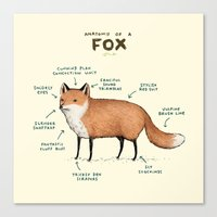 Anatomy of a Fox Canvas Print