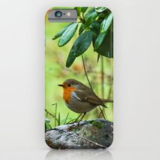 Robin in the spring iPhone 6 Slim Case
