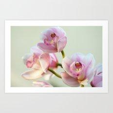 Cymbidium orchid 9770 Art Print