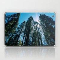Sequoias Laptop & iPad Skin