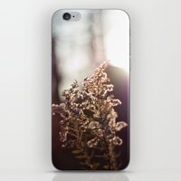 Goldenrod Light iPhone & iPod Skin
