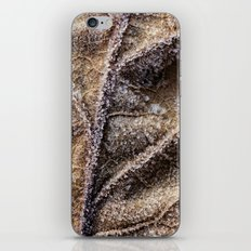 frost crystals on a leaf iPhone & iPod Skin