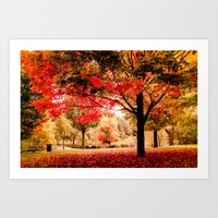 Red Maple In Larz Anders… Art Print