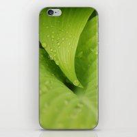 Dew Drops iPhone & iPod Skin
