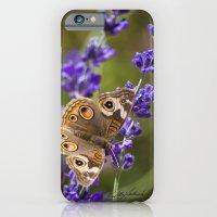 iPhone & iPod Case featuring Lavender Landing by Vikki Salmela
