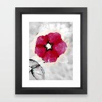 Pansy 091 Framed Art Print