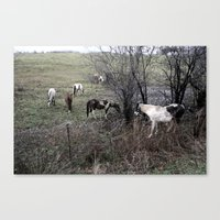 Horses All In A Row Canvas Print