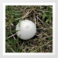 Fungus Growing In Queens… Art Print