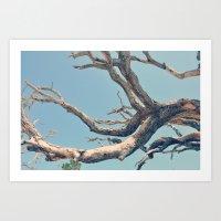 Driftwood Ladder Art Print