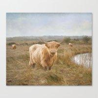 Highland Moo's Canvas Print