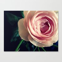 Stop To Smell The Roses … Canvas Print