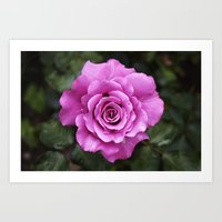 Rose, dear Art Print