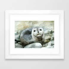 Curious Seal On The Pebb… Framed Art Print