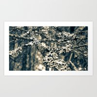 Covered Branches Art Print