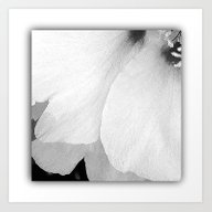 Drop Shadow White Petal… Art Print