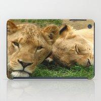 Asian Lions (Panthera leo persica) iPad Case