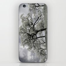 Looking at a dreamy Disposition iPhone & iPod Skin