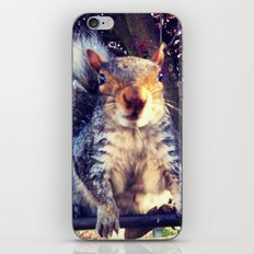 Going nuts iPhone & iPod Skin