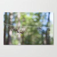 Spider 1 | Picture C Canvas Print