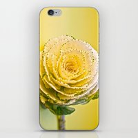 Cabbage Rose  iPhone & iPod Skin