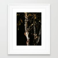Birch A'peel Framed Art Print