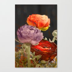 Vintage Ranunculus. Canvas Print