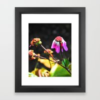 Hanging On To Beauty Framed Art Print