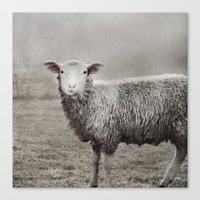 The Sheep Canvas Print